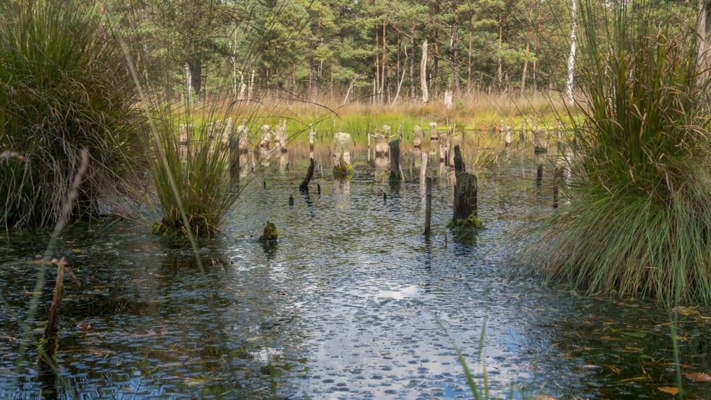 Paradies für Amphibien