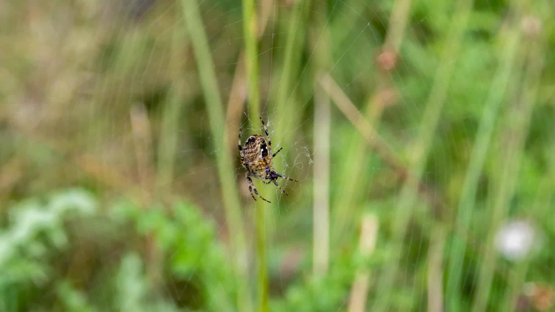 Spinne, aber welche?