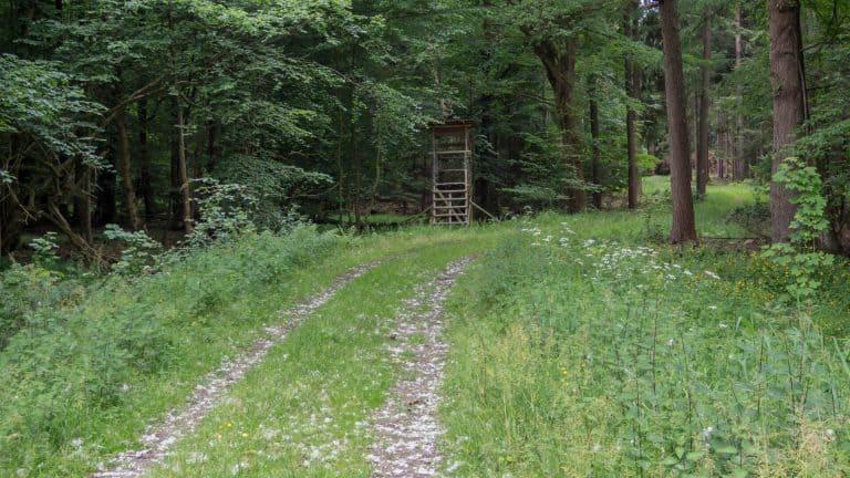 Nordpfad Eichholz und Franzhorn 9