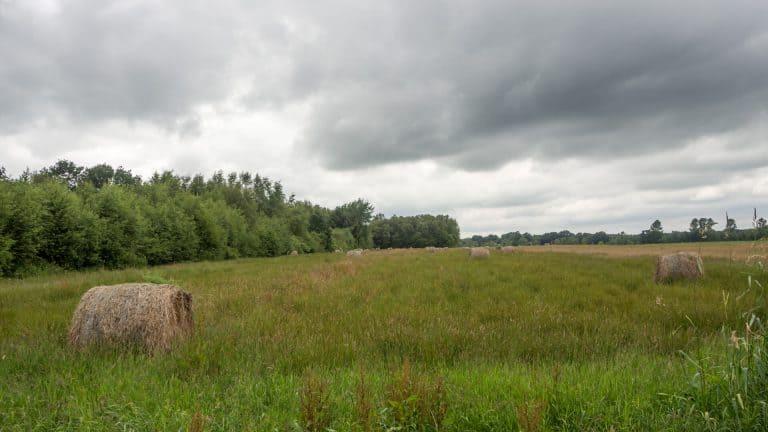 Nordpfad Eichholz und Franzhorn 21