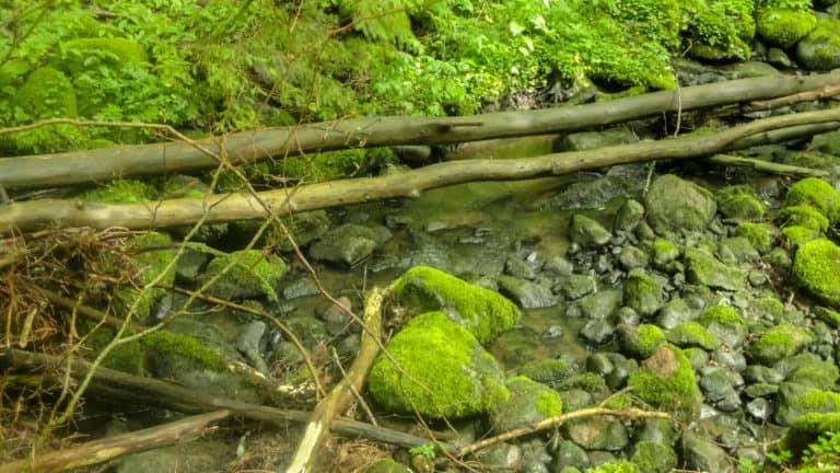 Tal im Wald 2