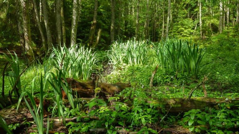 Tal im Wald 3