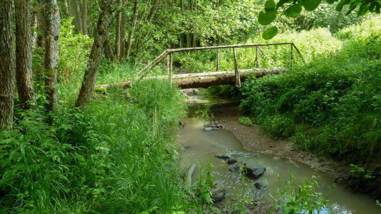 Tal im Wald 4