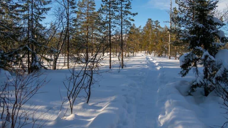 Fulufjäll Winter 1