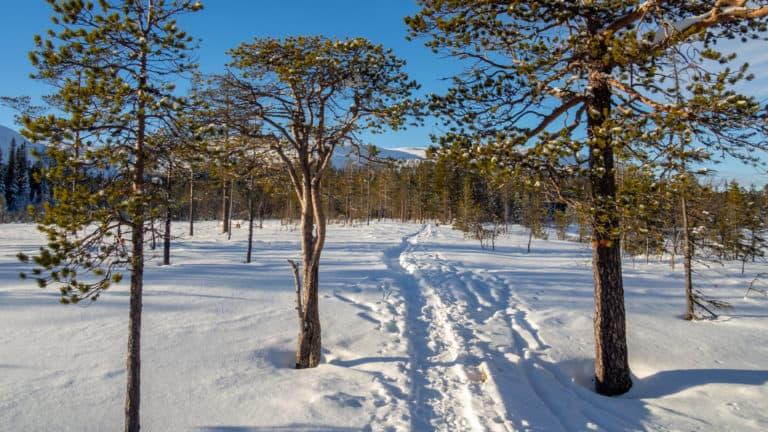 Fulufjäll Winter 3