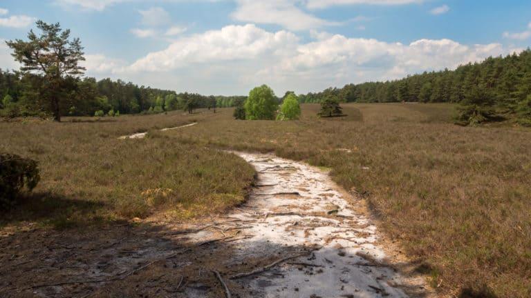 Misselhorner Heide 5