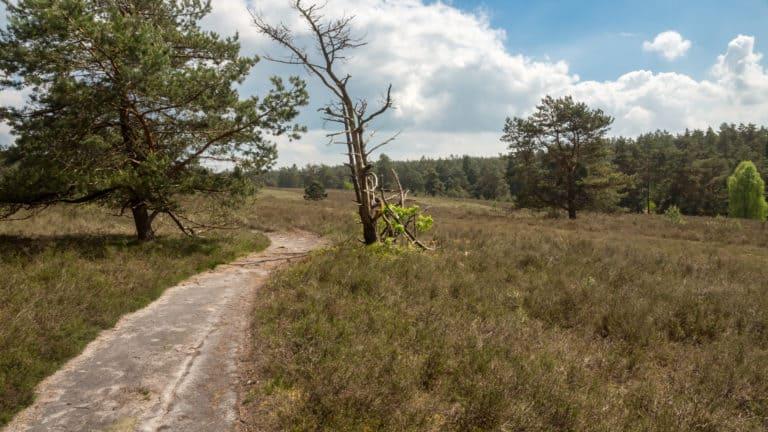 Misselhorner Heide 6