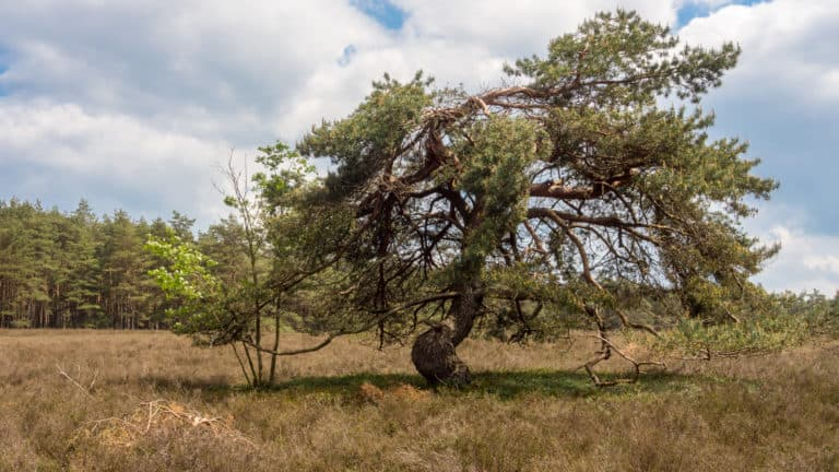 Misselhorner Heide 7