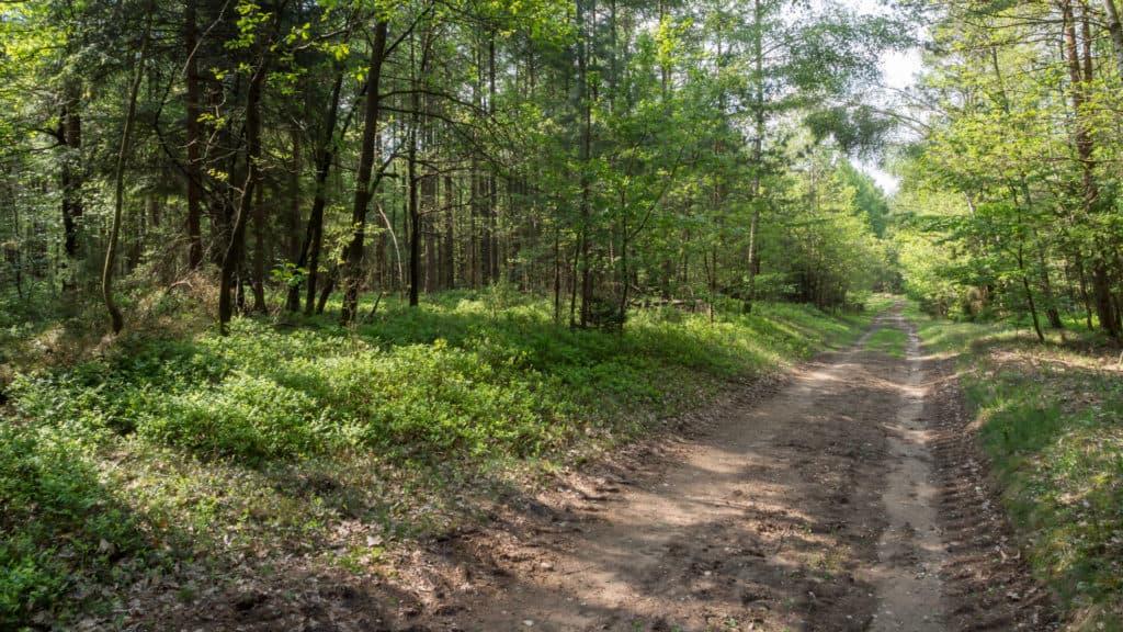 Wald Misselhorner Heide 1