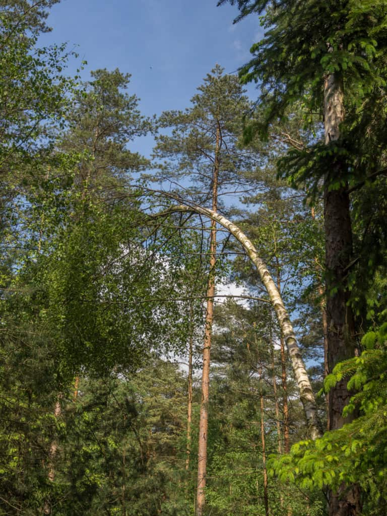 Wald Misselhorner Heide 5