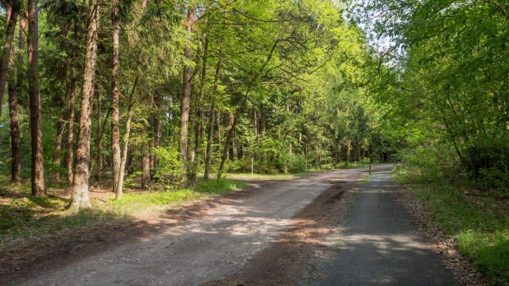 Wald Misselhorner Heide 2
