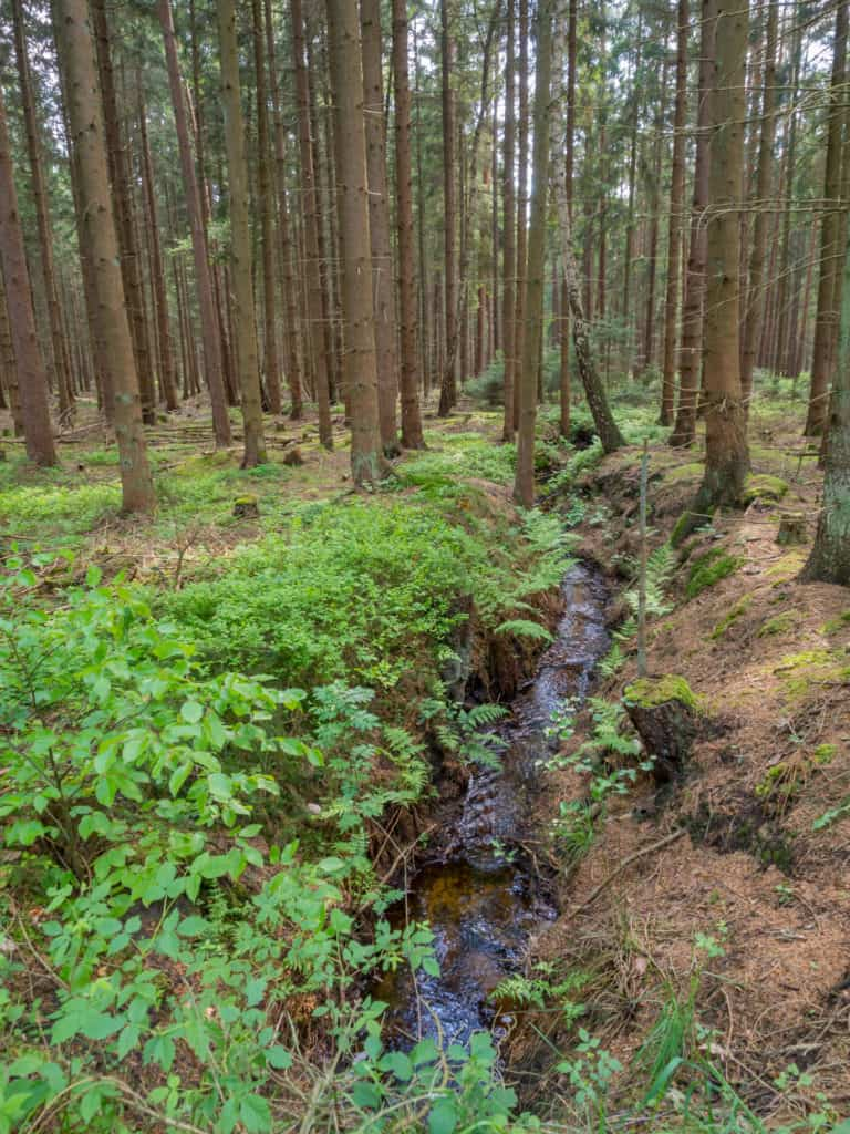 Wald Misselhorner Heide 3
