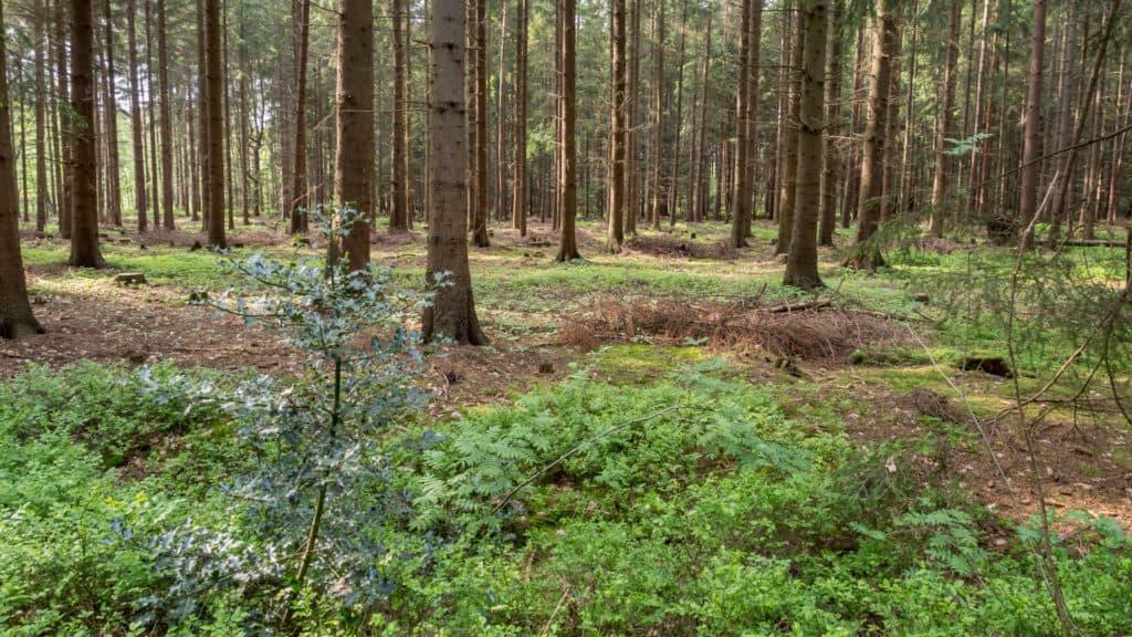 Wald Misselhorner Heide 4