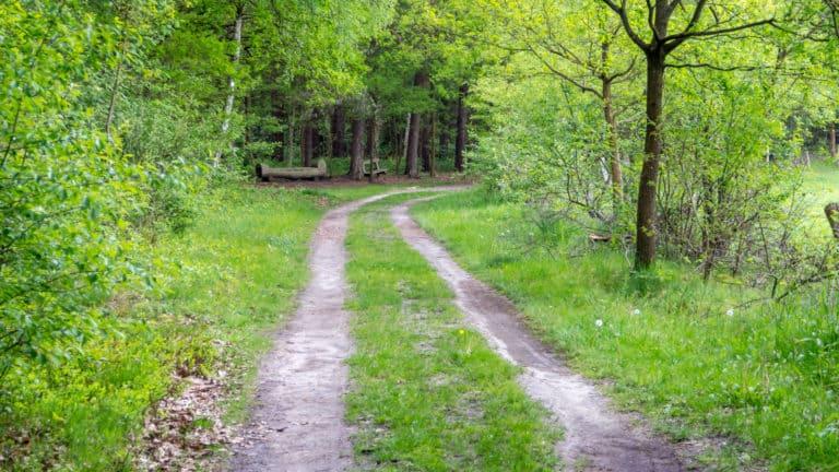 Misselhorner Heide 001