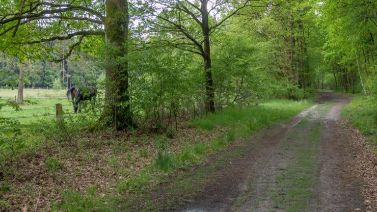 Misselhorner Heide 002