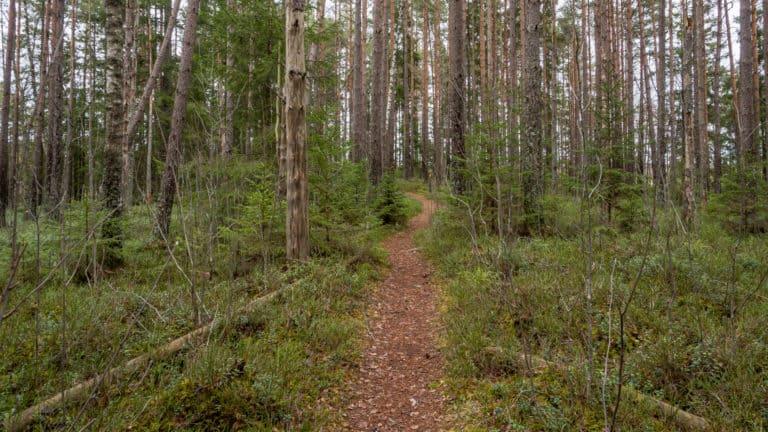 Weg durch das Waldstück