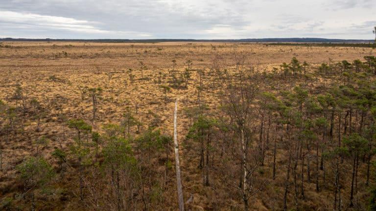 Blick vom Aussichtsturm auf den Wanderweg