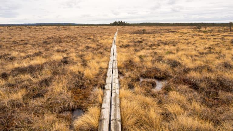 Holzbohlenweg 2