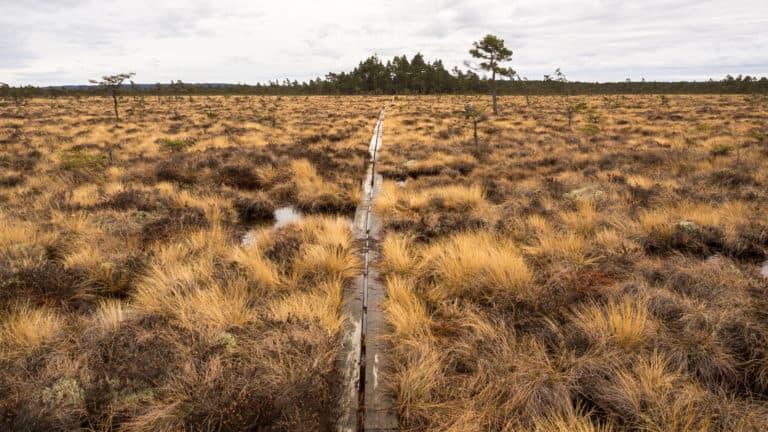 Holzbohlenweg 3