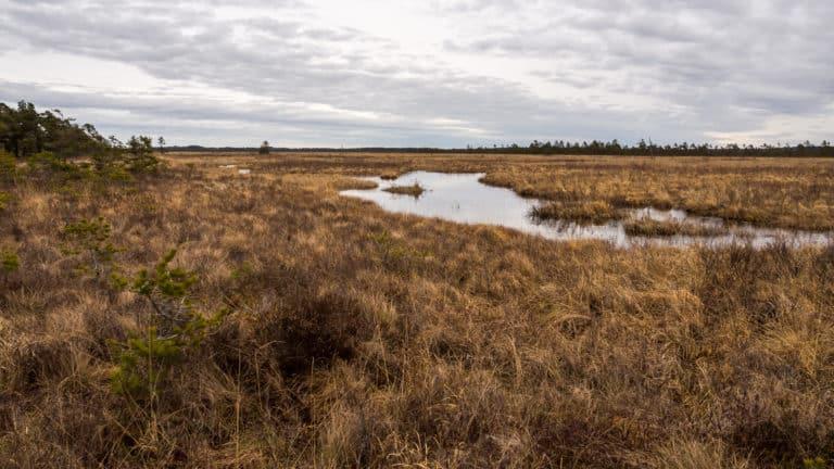 Fluss durchs Moor