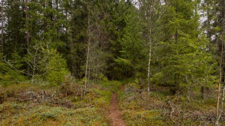 Zurück in den Wald