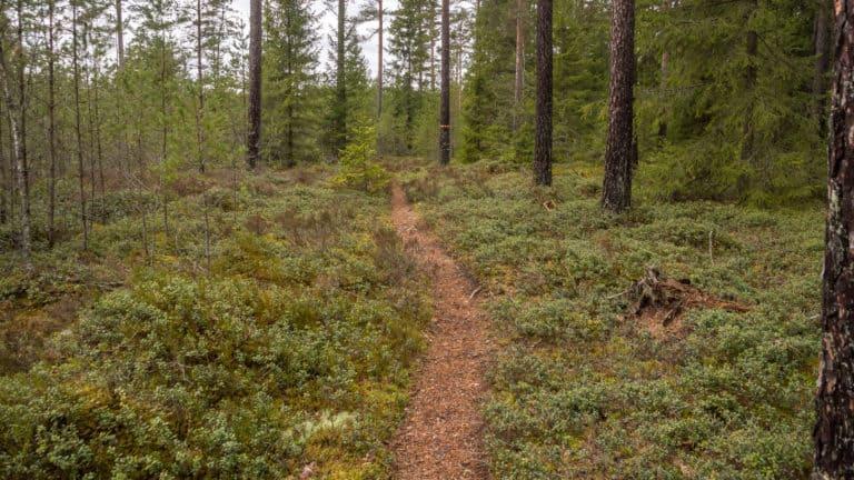 Wieder feste Waldwege