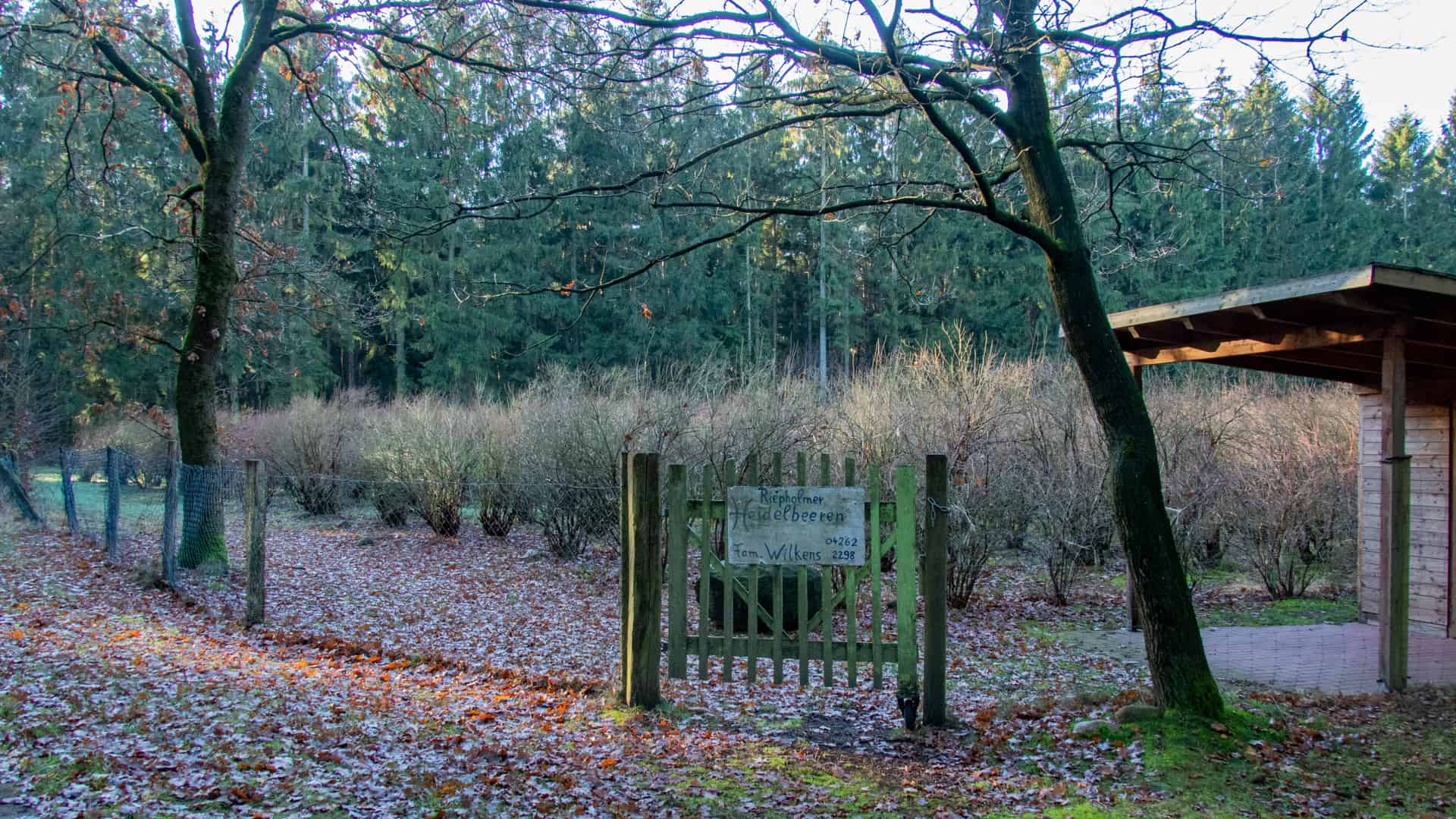 Heidelbeerplantage Hof Wilkens