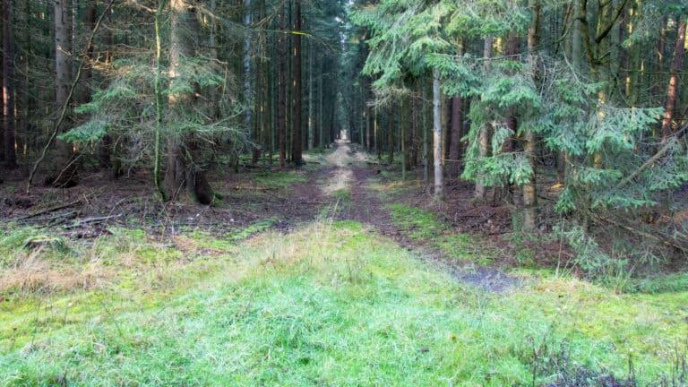 Waldweg ins dunkle