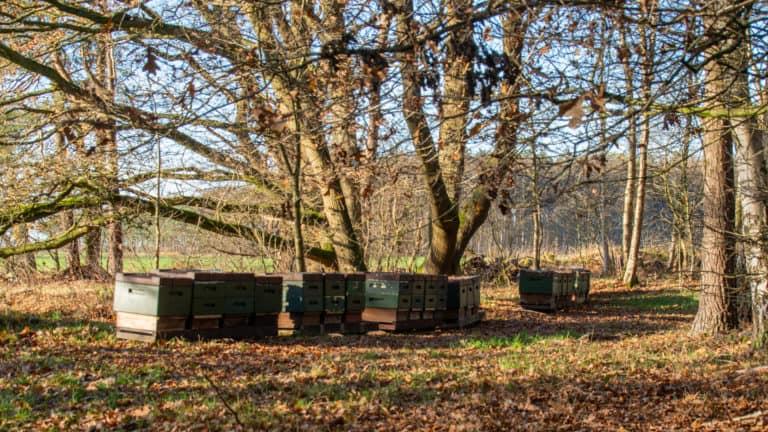 Bienenstöcke NP Riepholm-Gilkenheide