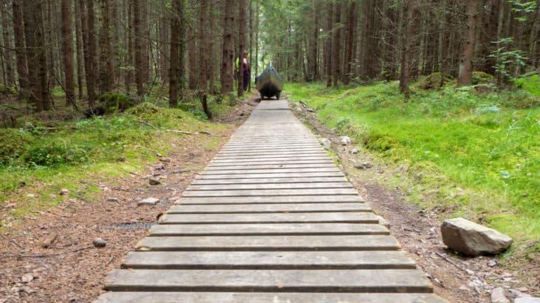 Steg durch den Wald