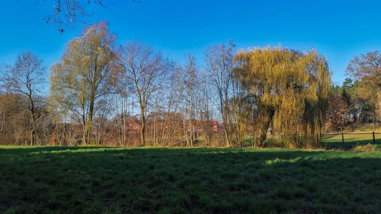 Mühlenbach Wiese
