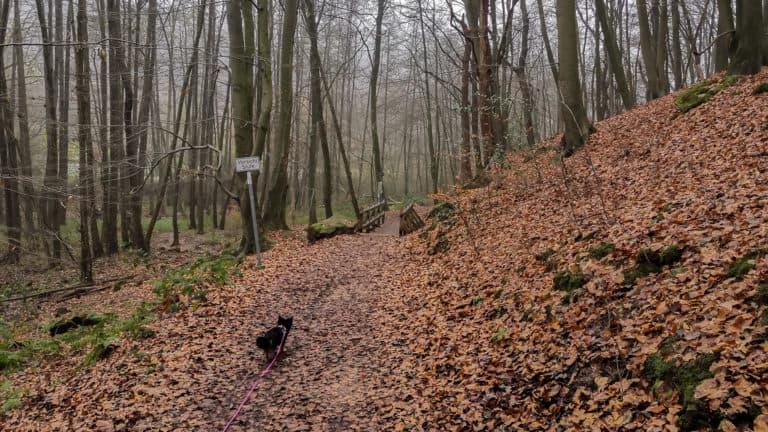 Waldweg Teutoschleifchen Dreikaiserstuhl01