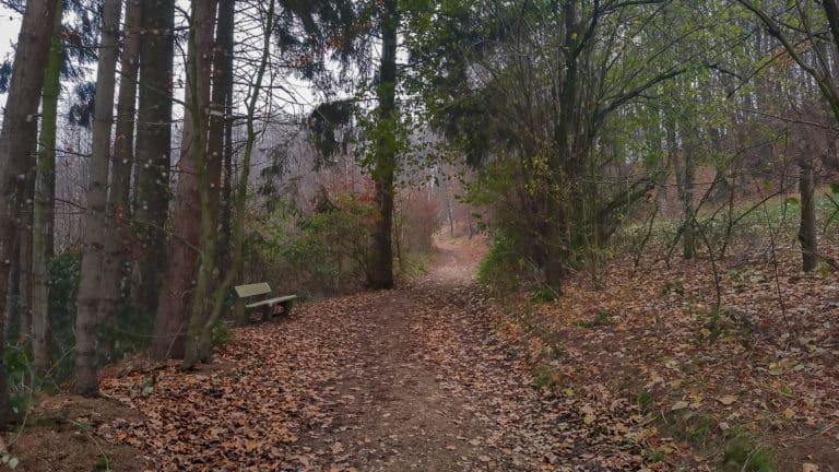 Waldweg vorbei an den Streuobstwiesen