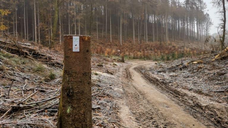 Holzeinschlag Teutoschleichen Dreikaiserstuhl