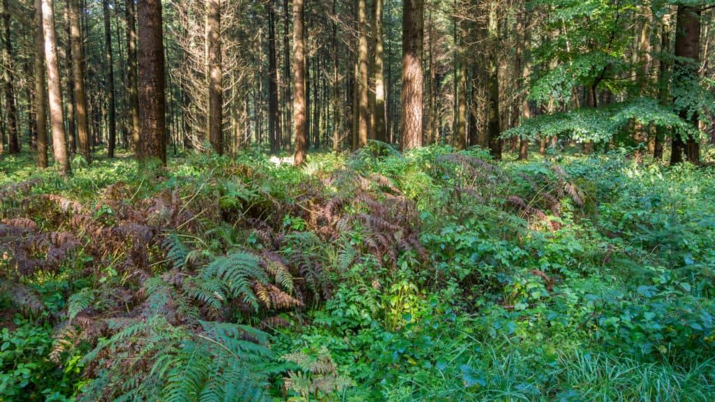 Steinfelder Holz 1