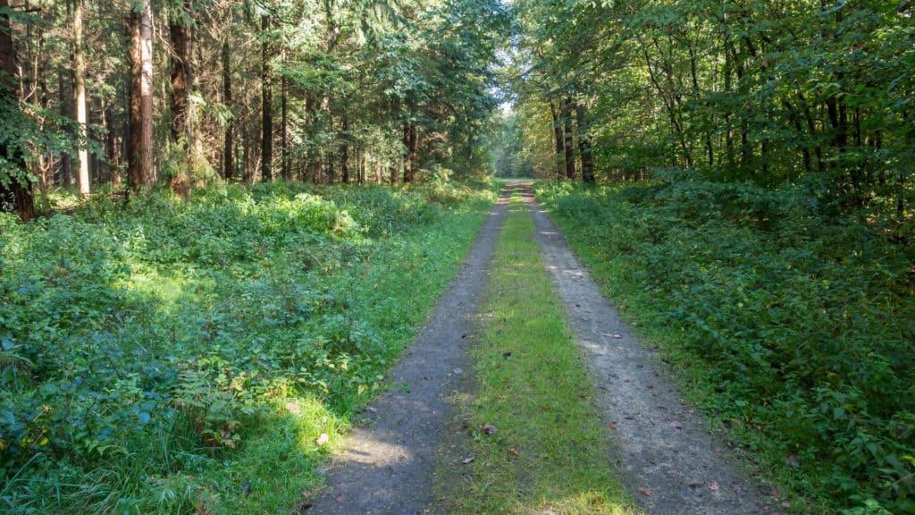 Steinfelder Holz 2