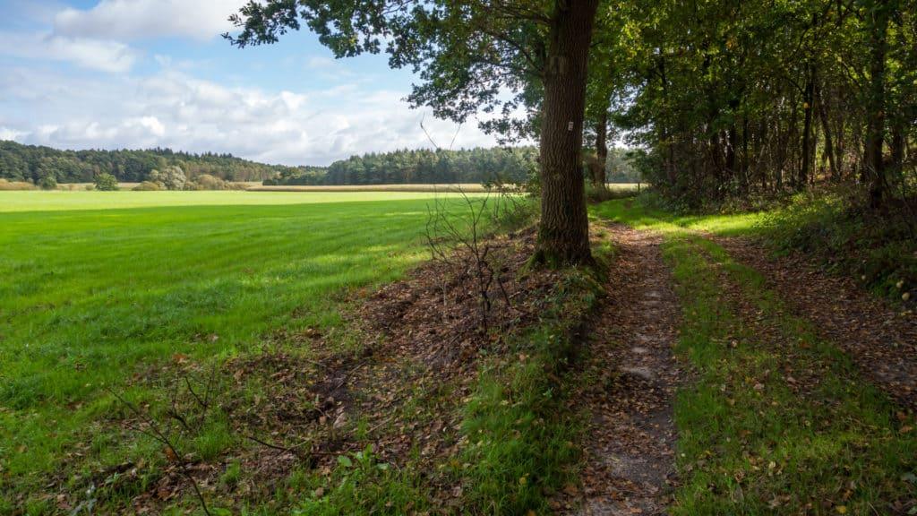 Weg am Waldrand Zwei Mühlen