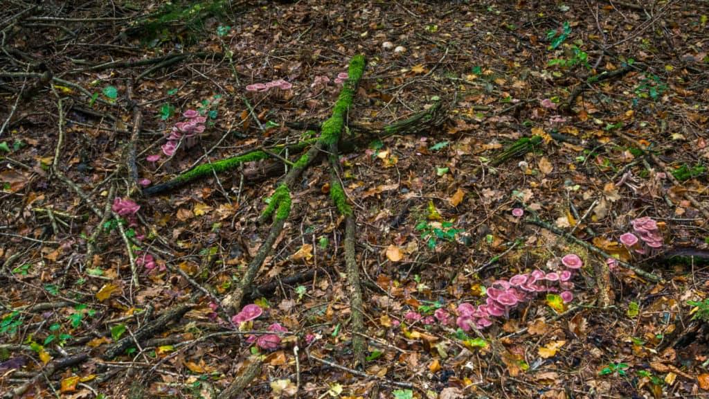 Hexenkreis im Wald1