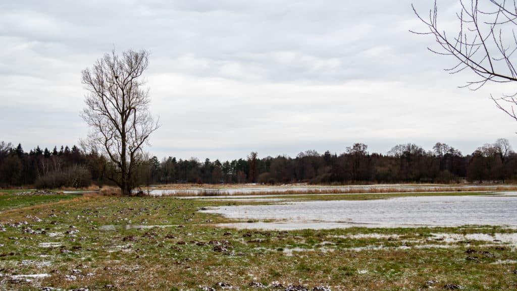 Überschwemmte Wümmewiesen 1