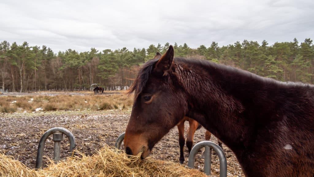 Pferde an der Wümmeniederung 1