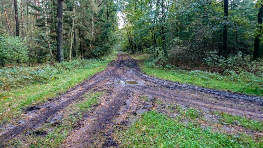 Forstweg Nordpfad Ostetal 1