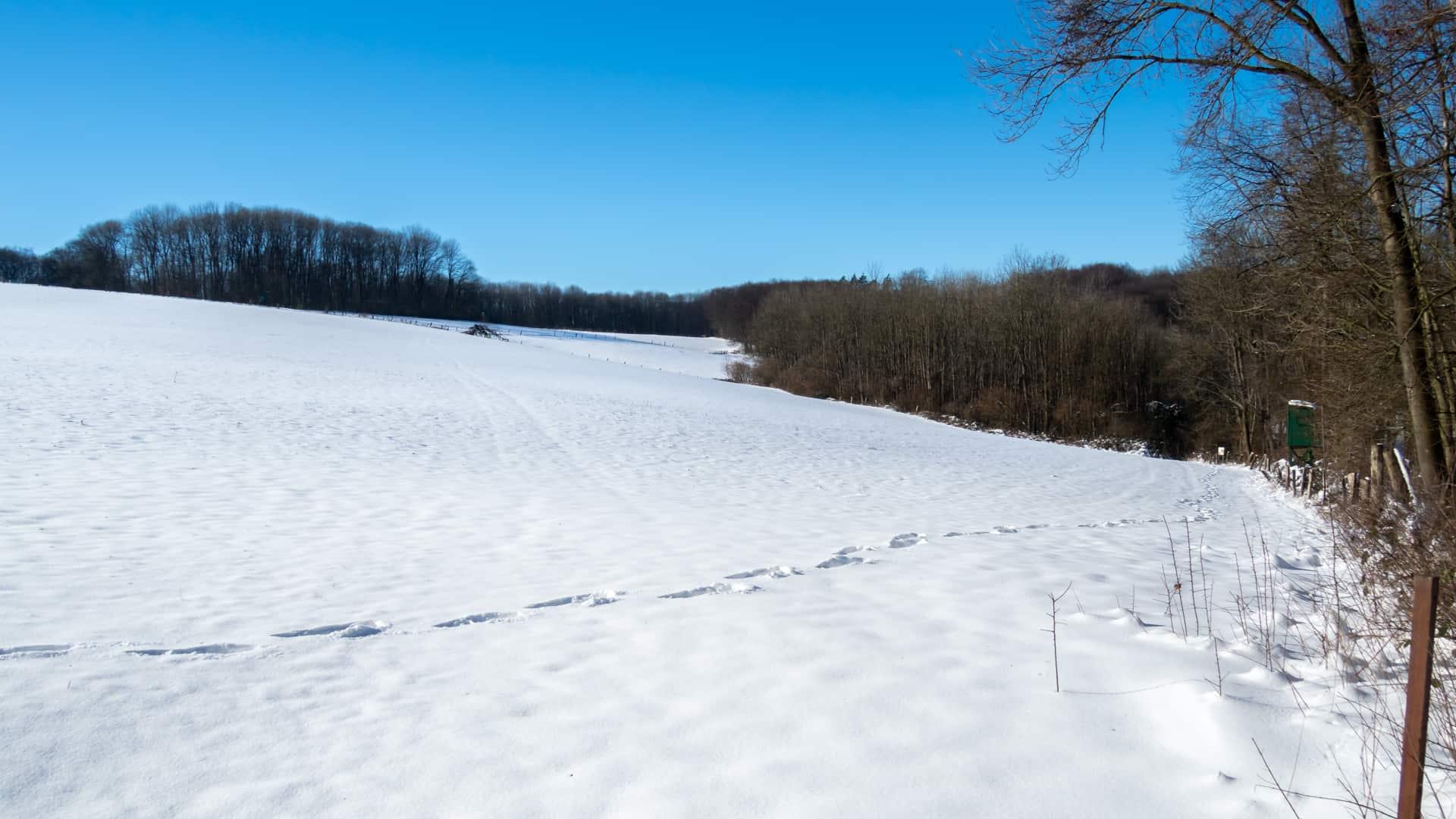 Verschneite Wiese 1