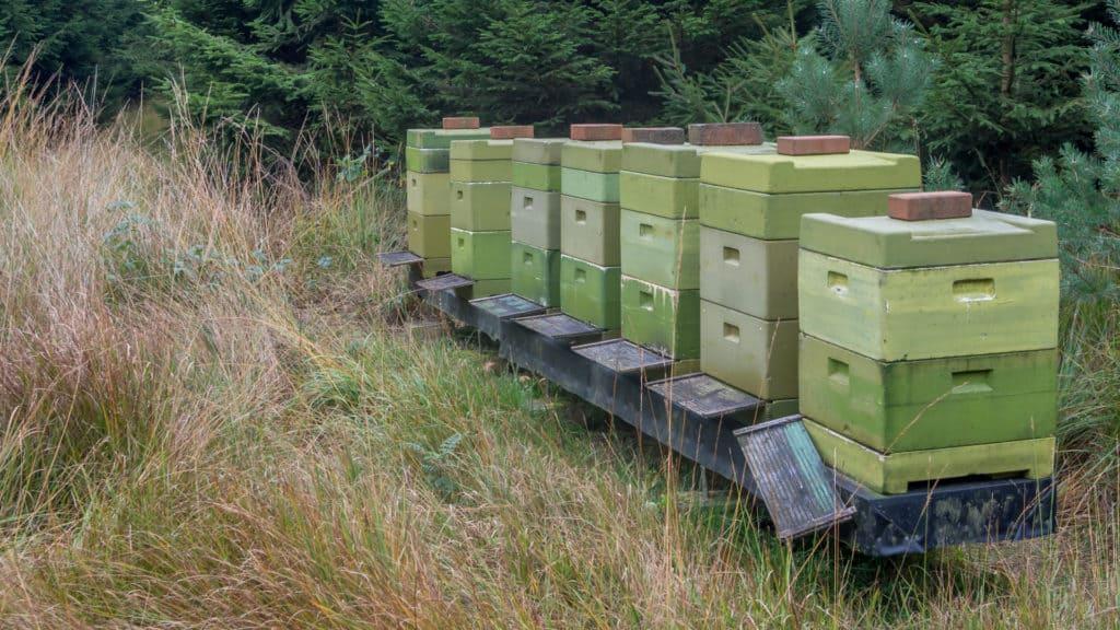 Bienenstöcke NP Hinzel