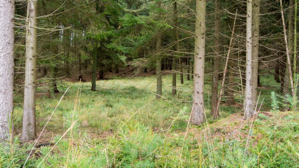 Nordpfad Hinzel 9