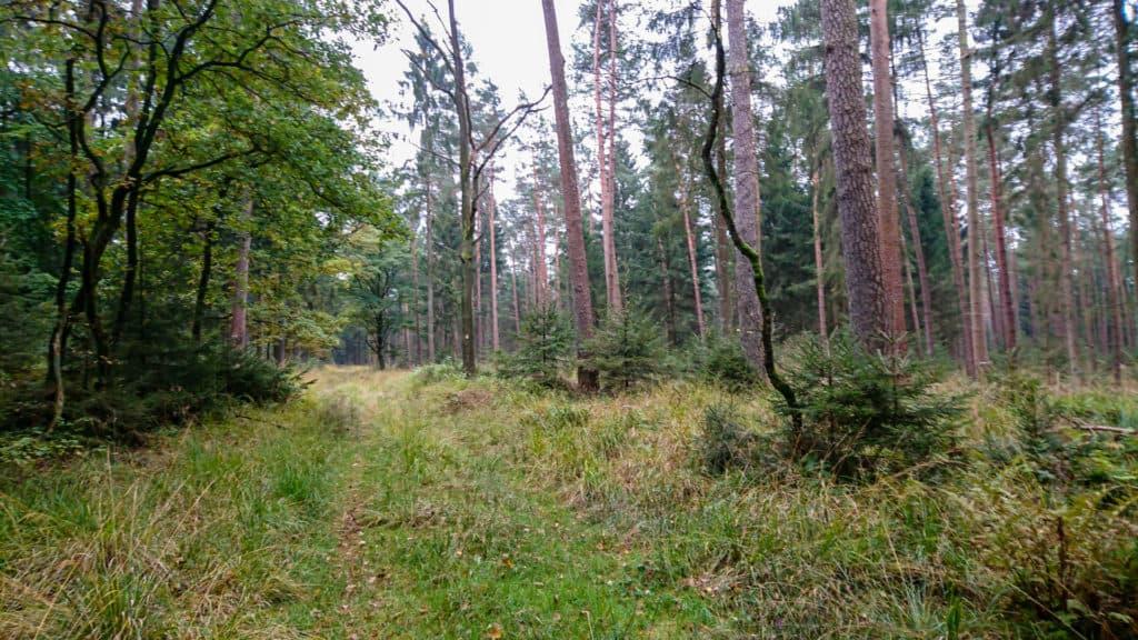 Nordpfad Hinzel 11
