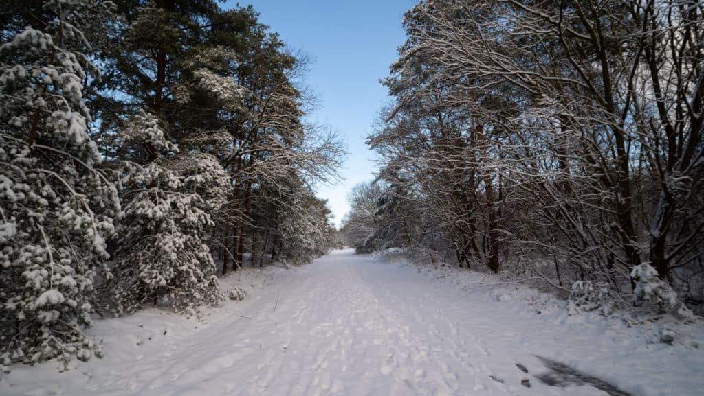 Durch den verschneiten Wald 1
