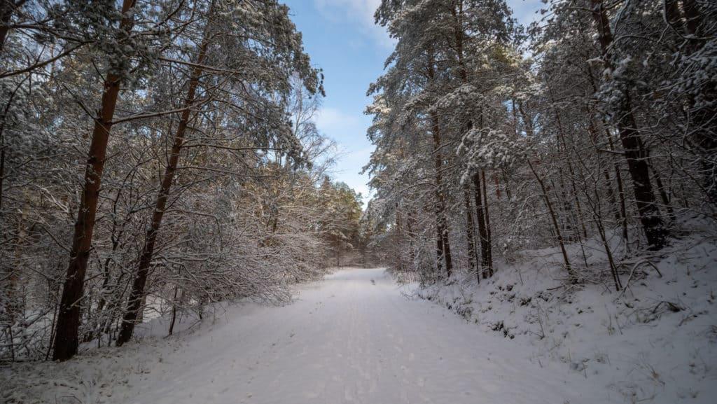Durch den verschneiten Wald 2