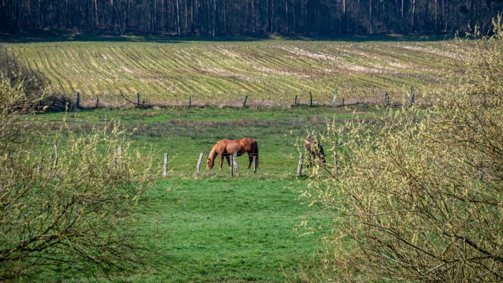 Abzweig Granstedter See 1