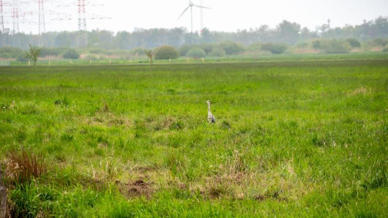 Werderland Rundweg 5